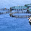 Stock Photo: Fish farm on sea