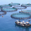 Fish farm on the sea — Stock Photo