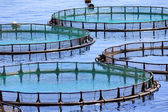 Fish farm — Stock Photo