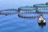 Fish farm on the sea — Stock Photo