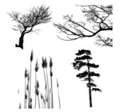 Tree set — Stock Photo