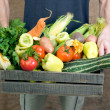 Fresh vegetables — Stock Photo #7969464