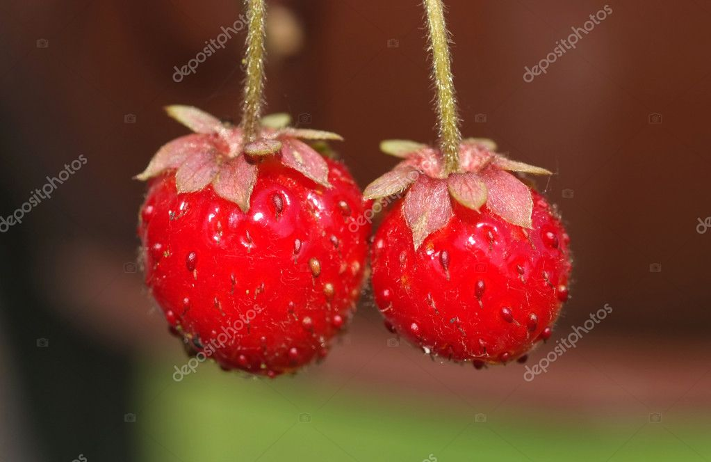 Fresh and delicious wild strawberries — Stock Photo #9569113