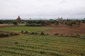 Bagan doliny z święte świątynie — Zdjęcie stockowe