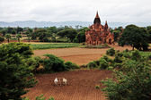 Bagan landscape with holy temples and field — Stock Photo