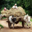 Farmers with their cart in Myanmar — Stock Photo #8428057
