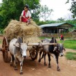 Farmer boy with his cart in Myanmar — Stock Photo