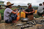 Myanmar couple selling fish at the market — Stock Photo