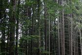 Natura della foresta nera — Foto Stock