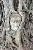 Buddha face carved in tree's roots, Ayuttaya, Thailand — Stock Photo