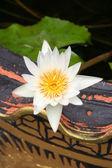 Lotus Blumen in einer vase — Stockfoto
