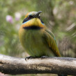 Bee eater — Stock Photo #8397244