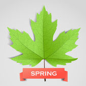 Maple leave with spring banner — Vecteur