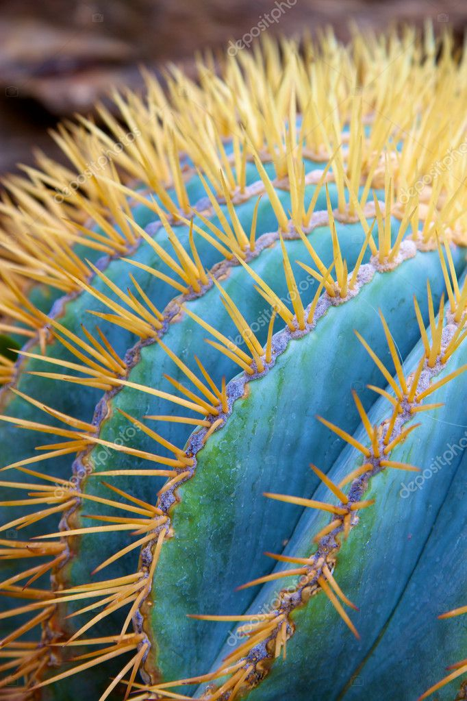 Photo of a cactus with a special color. — Stock Photo #8753374