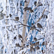 Stock Photo: Bird winter trees