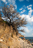 """Tree on a cliff against the sky"" — Stock Photo"