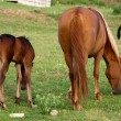"Stock Photo: ""Foal and mare on a pasture"""
