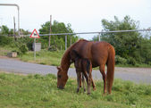 """The mare and foal are grazed near road on a meadow"" — Stock Photo"