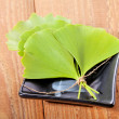 Ginkgo biloba - Stock Photo