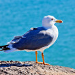 Gull bitd - Stock Photo