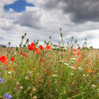 Cornflower and poppy - Stock Photo