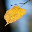 Autumn — Stockfoto #8687474