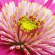 Gerbera — Stock Photo #8728221