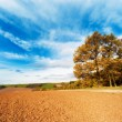Arable land - Stock Photo
