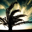Palm Silhouette — Stock Photo