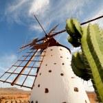Windmill — Stock Photo #8762002