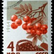 "Mountain ash from the series ""Berries"", circa 1964 — Stock Photo"