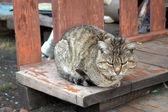 Деревенский кот — Stock Photo