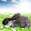 Cute Rabbit — Stockfoto