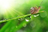 Small snail — Stock Photo