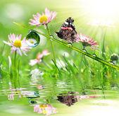 Rocío y mariposa — Foto de Stock