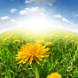 Dandelions — Stock Photo #10588924