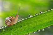 Snail on grass — 图库照片