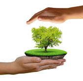 Little island and trees in hands — Stock Photo