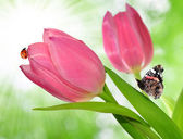 Tulipán con mariposas y mariquita — Foto de Stock