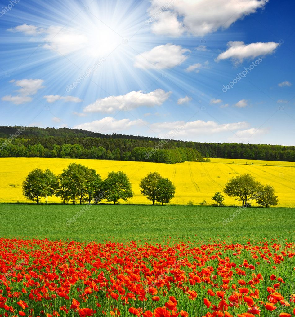 Spring landscape with red poppy field in the Czech Republic — Stock Photo #10671717