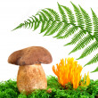 Mushrooms Tylopilus felleus and Ramaria Formosa - Foto de Stock