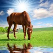 Horse in the meadow — Stock Photo #7974582