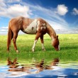 Horse in the meadow - Stock Photo