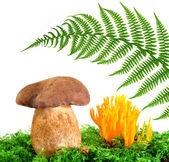 Mushrooms Tylopilus felleus and Ramaria Formosa — Stock Photo