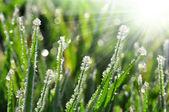 Frozen morning dew — Stock Photo