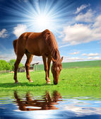 Horse in the meadow — Stock Photo