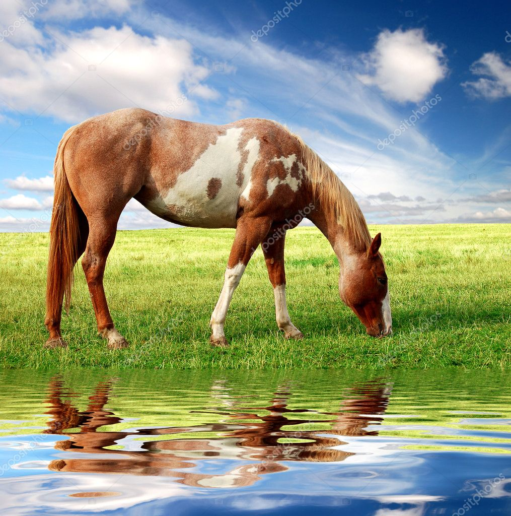 Horse in the meadow with blue sky — Stock Photo #7974689