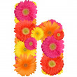 Alphabet of Gerbera - Stockfoto