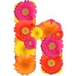 Alphabet of Gerbera - Foto de Stock