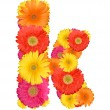 Alphabet of Gerbera - Foto Stock